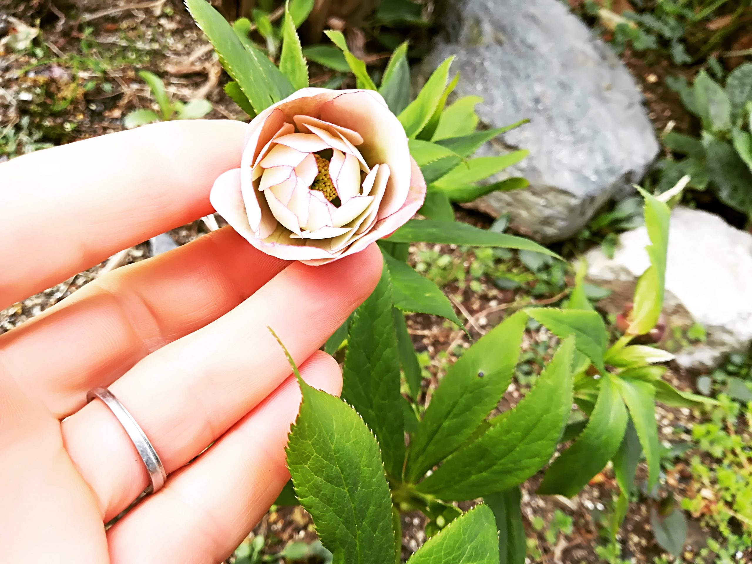 3月26日(木) 本日のカレー4種